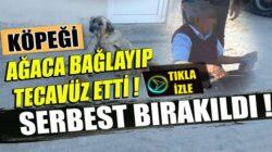 Kocaeli Kandıra'da Yaşlı adam köpeğe tecavüz ederken yakalandı
